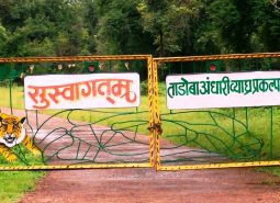 Tadoba National Park By Booking Jeep Safari