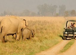 Corbett National Park- Experience The Wildlife