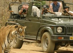 ranthambore-national-park-tiger-safari-timings