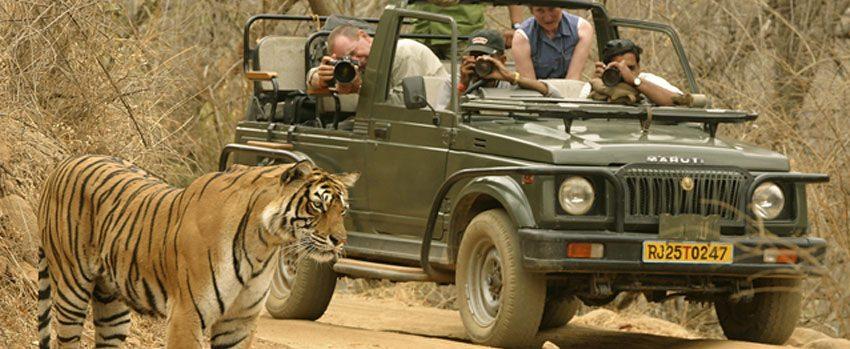 ranthambore-national-park-tiger-safari-timings