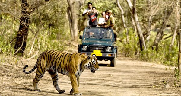 Tiger Safari at the Tadoba